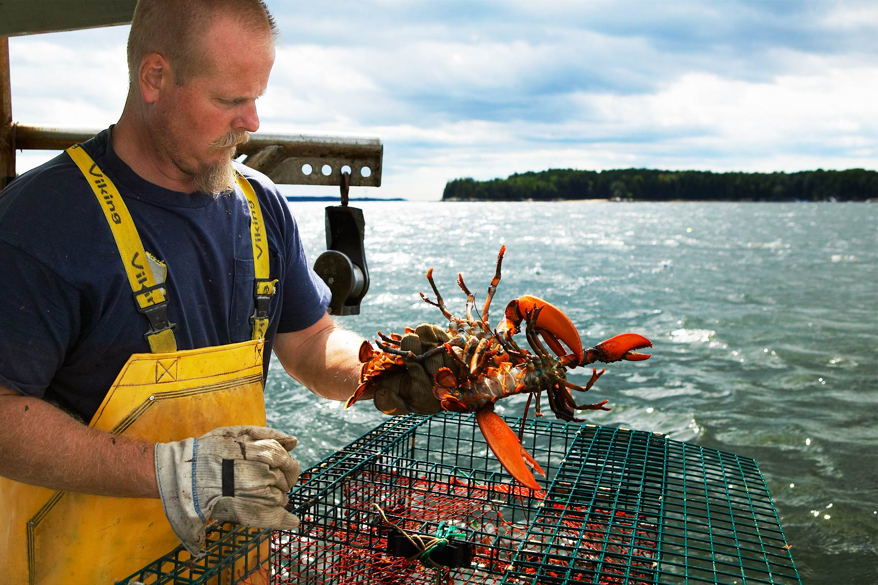 Lobster Man